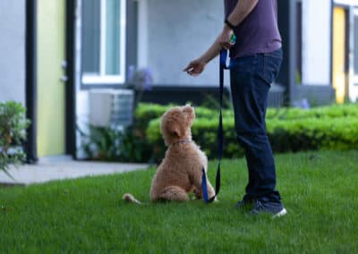 Man having fun with Puppy sitting on the green grass